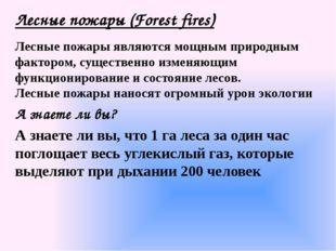 Лесные пожары (Forest fires) Лесные пожары являются мощным природным фактором