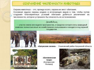 Охрана животных – это, прежде всего, охрана их мест обитания. Основная задача