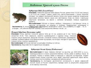 Животные Красной книги России Кавказская Жаба (Земноводные) Описание:Наиболе