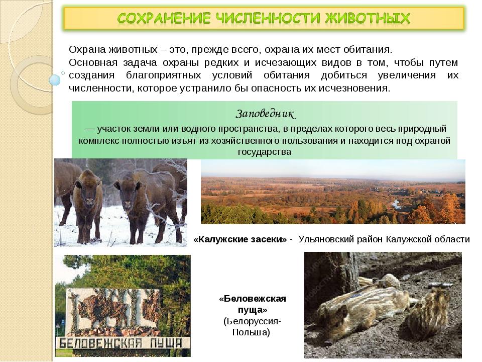 Охрана животных – это, прежде всего, охрана их мест обитания. Основная задача...