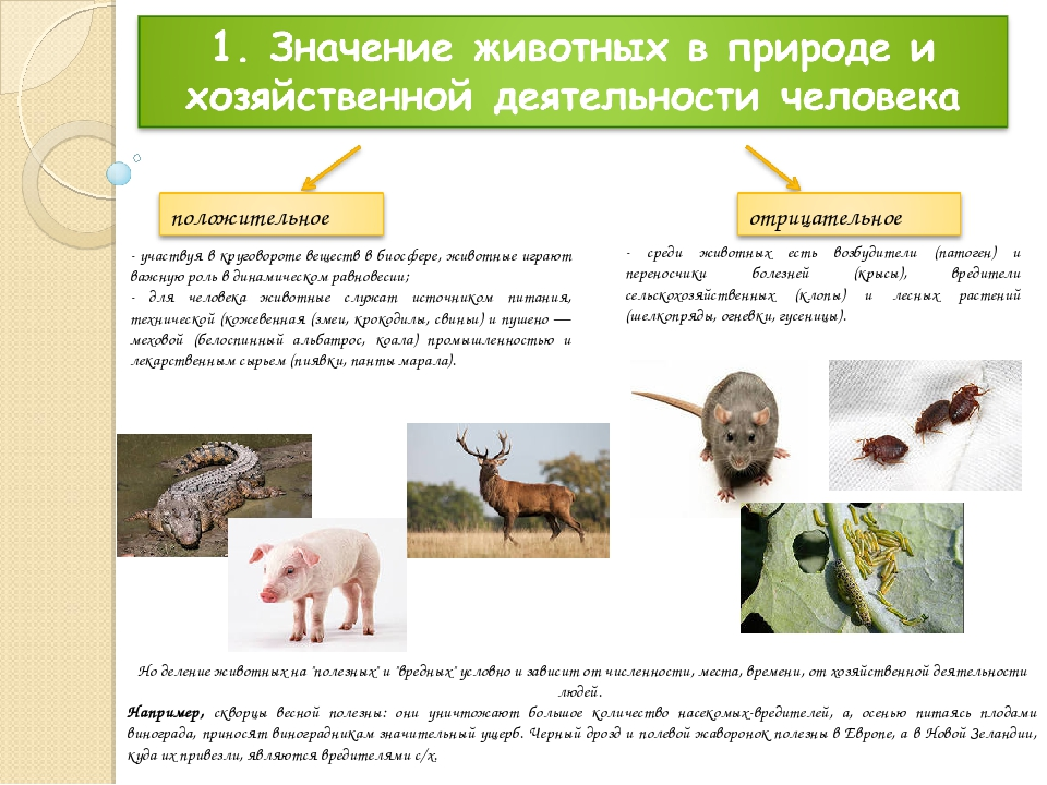 - участвуя в круговороте веществ в биосфере, животные играют важную роль в ди...