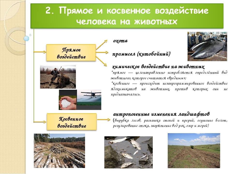охота антропогенные изменения ландшафтов (вырубка лесов, распашка степей и пр...