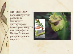 * ФИТОФТОРА паразитируют на растениях (вызывают фитофторозы); некоторые живут