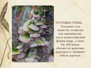 * ТРУТОВЫЕ ГРИБЫ Плодовые тела мясистые, кожистые или деревянистые, часто коп