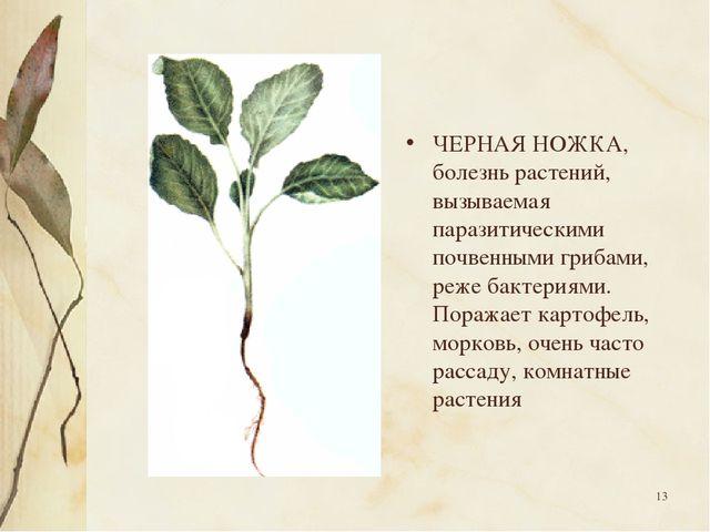 * ЧЕРНАЯ НОЖКА, болезнь растений, вызываемая паразитическими почвенными гриба...