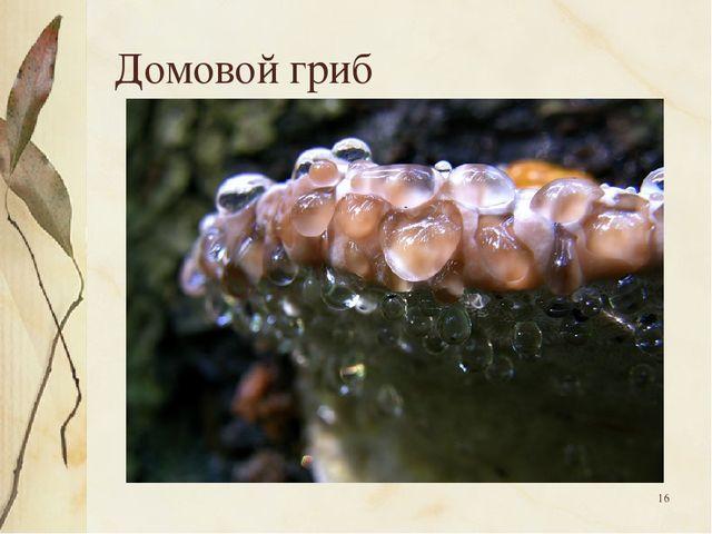 * Домовой гриб