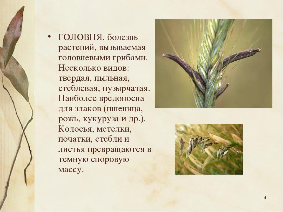 * ГОЛОВНЯ, болезнь растений, вызываемая головневыми грибами. Несколько видов:...
