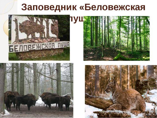 Заповедник «Беловежская пуща»