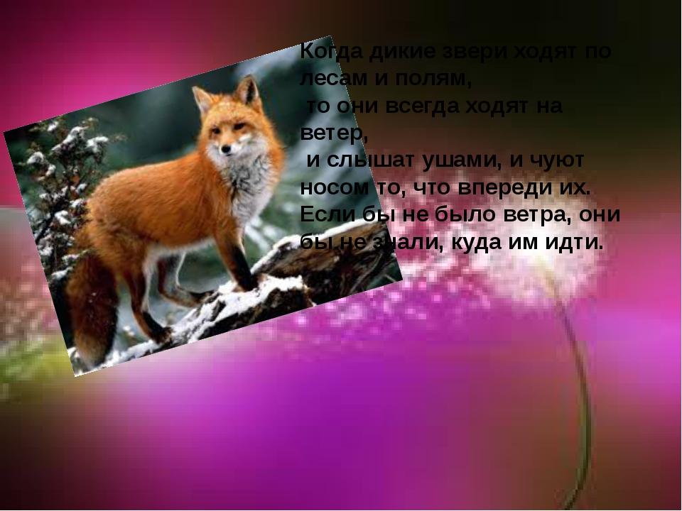 Когда дикие звери ходят по лесам и полям, то они всегда ходят на ветер, и слы...