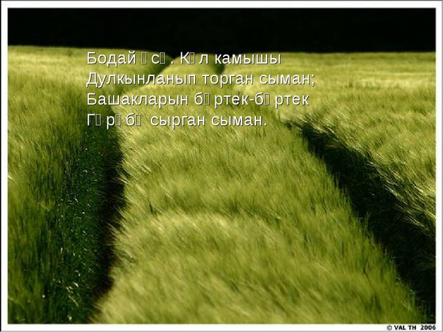Бодай үсә. Күл камышы Дулкынланып торган сыман; Башакларын бөртек-бөртек Гәрә...