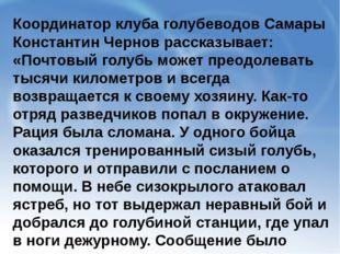 Координатор клуба голубеводов Самары Константин Чернов рассказывает: «Почтовы