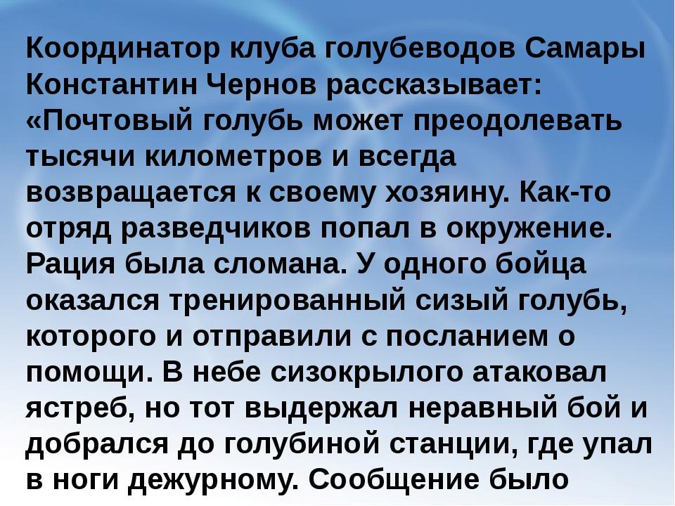 Координатор клуба голубеводов Самары Константин Чернов рассказывает: «Почтовы...
