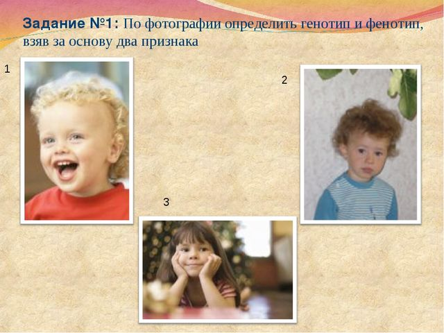 Задание №1: По фотографии определить генотип и фенотип, взяв за основу два пр...