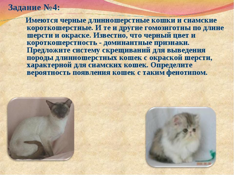 Задание №4: Имеются черные длинношерстные кошки и сиамские короткошерстные. И...