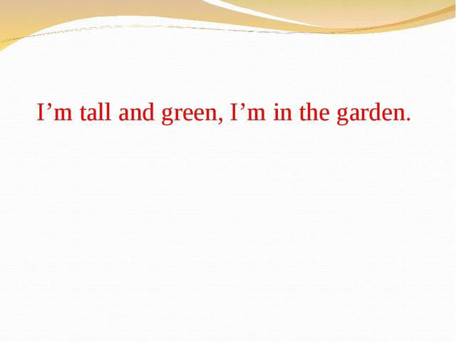 I'm tall and green, I'm in the garden.