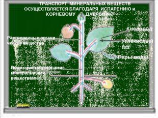 Пары воды Кислород Углекислый газ Растворенные органи-ческие вещества Вода с