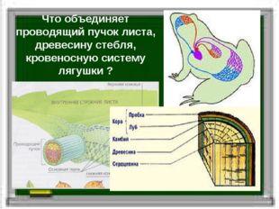 Что объединяет проводящий пучок листа, древесину стебля, кровеносную систему