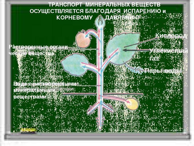 Пары воды Кислород Углекислый газ Растворенные органи-ческие вещества Вода с...