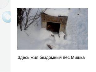 Здесь жил бездомный пес Мишка