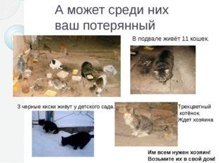А может среди них ваш потерянный питомец? В подвале живёт 11 кошек. 3 черные