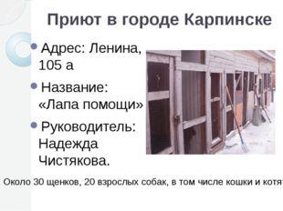 Приют в городе Карпинске Адрес: Ленина, 105 а Название: «Лапа помощи» Руковод