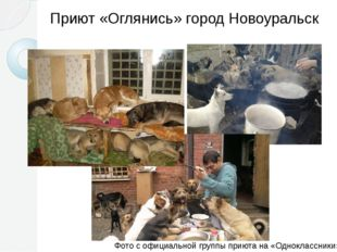 Приют «Оглянись» город Новоуральск Фото с официальной группы приюта на «Однок