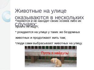 Животные на улице оказываются в нескольких случаях: теряются и не находят сво