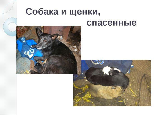 Собака и щенки, спасенные от мороза