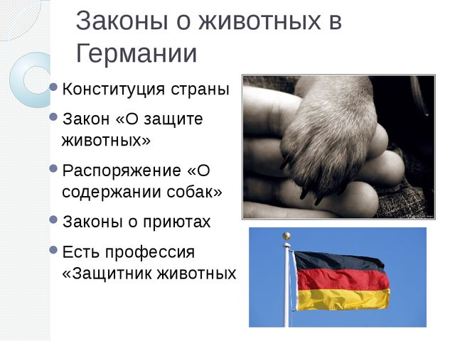 Законы о животных в Германии Конституция страны Закон «О защите животных» Рас...
