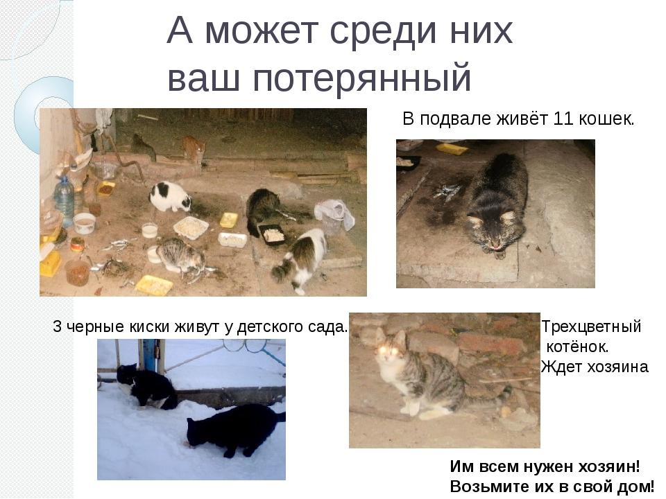 А может среди них ваш потерянный питомец? В подвале живёт 11 кошек. 3 черные...