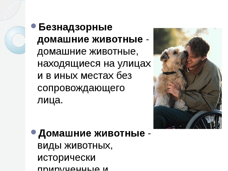 Безнадзорные домашние животные - домашние животные, находящиеся на улицах и в...