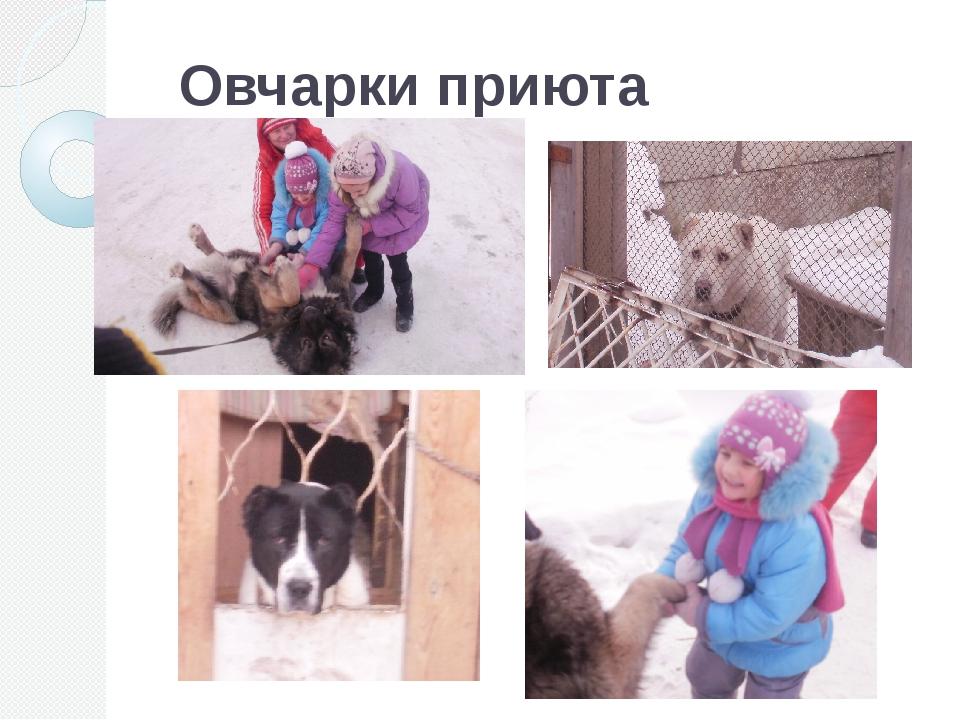 Овчарки приюта г.Карпинск