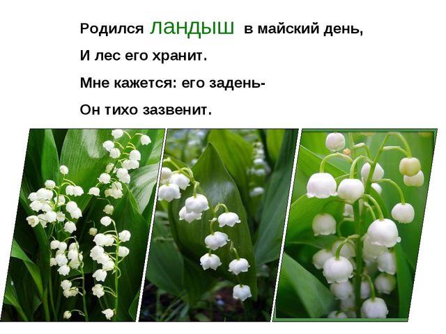 Родился в майский день, И лес его хранит. Мне кажется: его задень- Он тихо за...