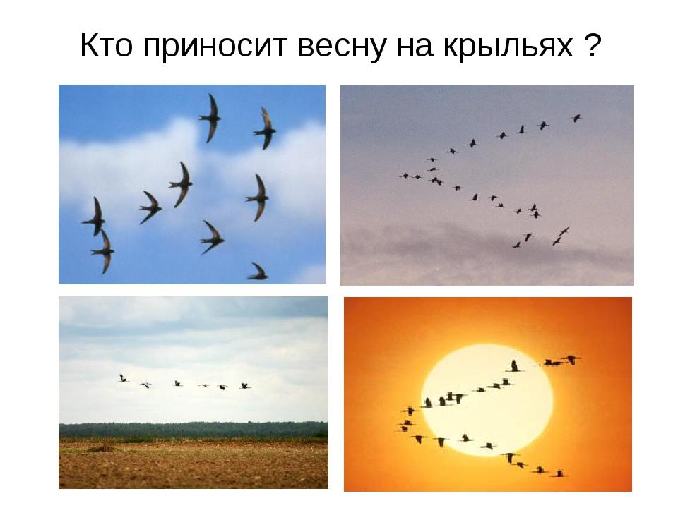 Кто приносит весну на крыльях ?
