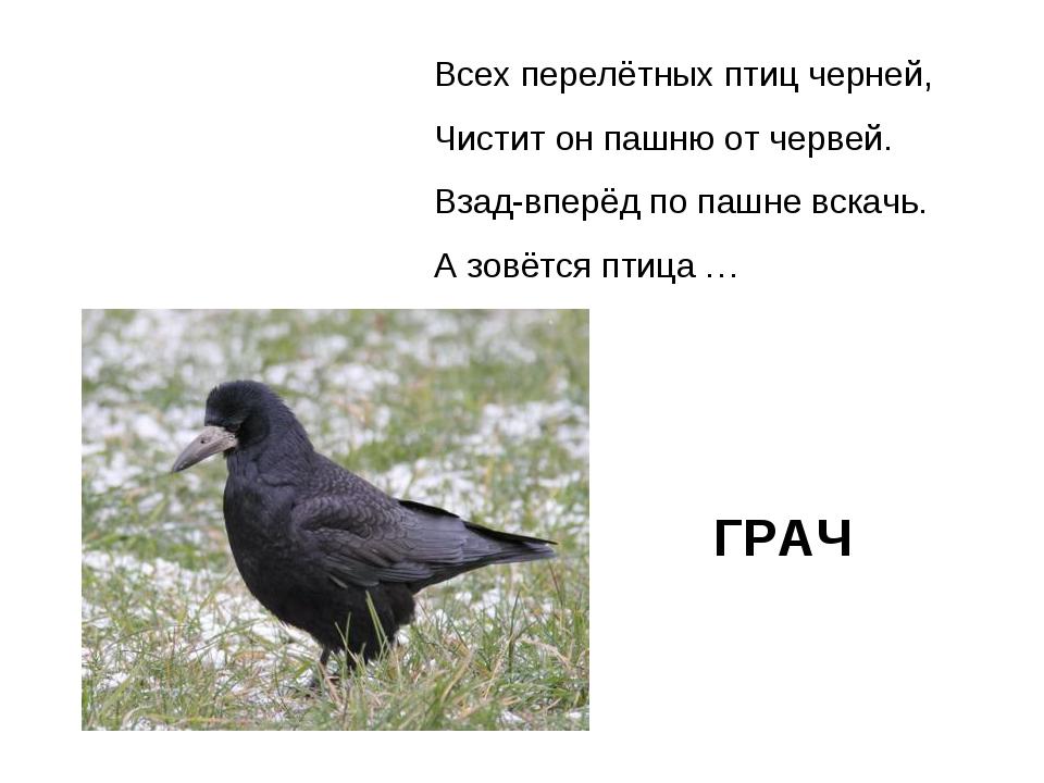 Всех перелётных птиц черней, Чистит он пашню от червей. Взад-вперёд по пашне...