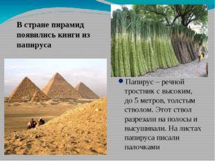 Папирус – речной тростник с высоким, до 5 метров, толстым стволом. Этот ствол