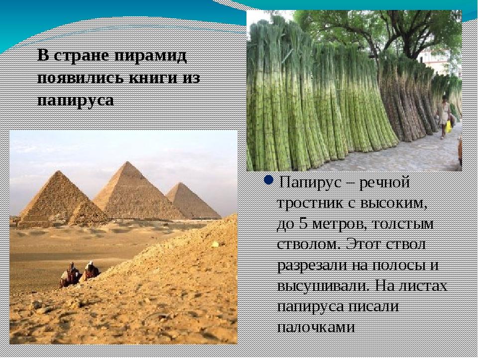 Папирус – речной тростник с высоким, до 5 метров, толстым стволом. Этот ствол...