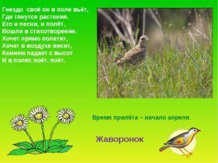 Гнездо своё он в поле вьёт, Где тянутся растения. Его и песни, и полёт, Вошли