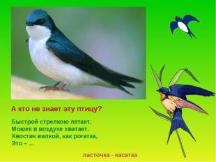А кто не знает эту птицу? ласточка - касатка Быстрой стрелкою летает, Мошек