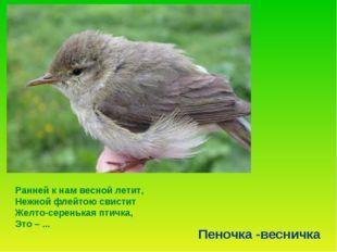 Ранней к нам весной летит, Нежной флейтою свистит Желто-серенькая птичка, Это
