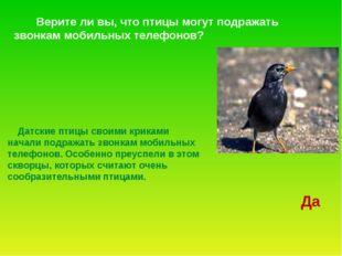 Датские птицы своими криками начали подражать звонкам мобильных телефонов. О