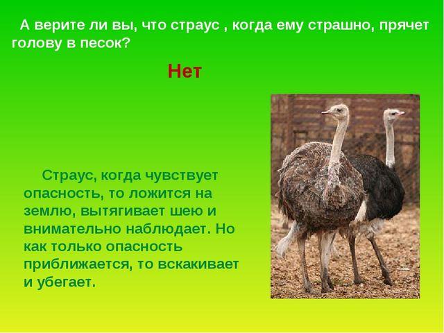 А верите ли вы, что страус , когда ему страшно, прячет голову в песок? Страу...