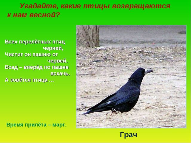 Угадайте, какие птицы возвращаются к нам весной? Всех перелётных птиц черней...