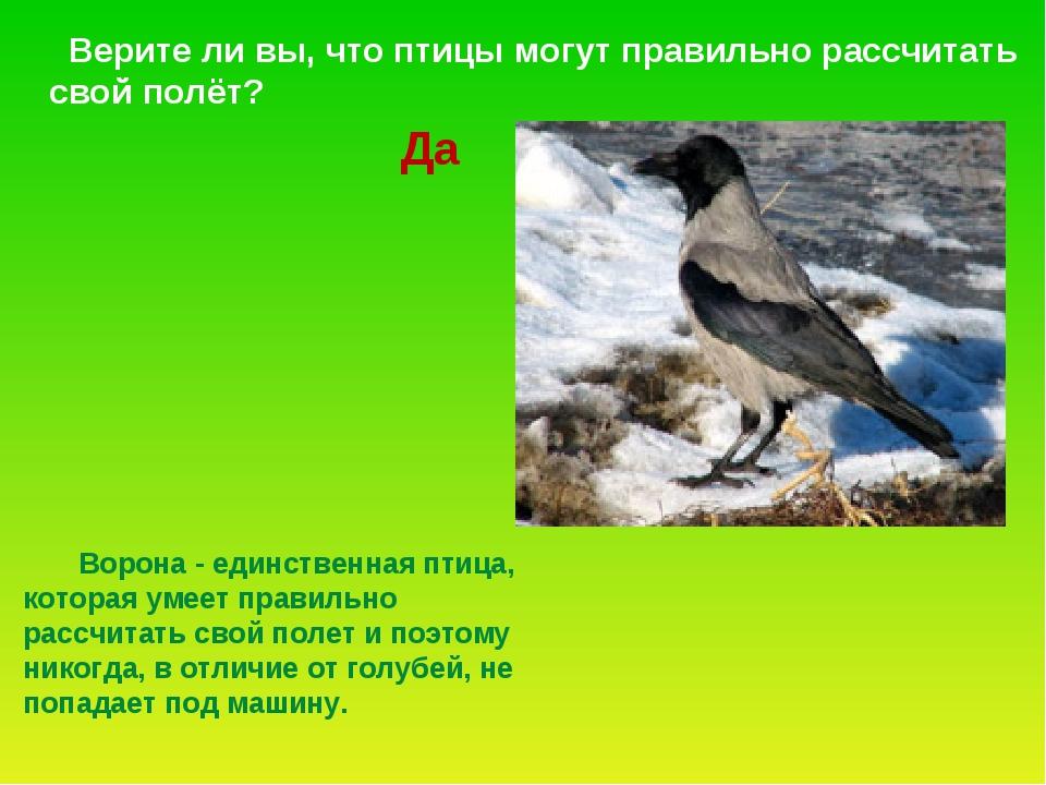 Ворона - единственная птица, которая умеет правильно рассчитать свой полет и...