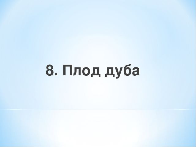 8. Плод дуба
