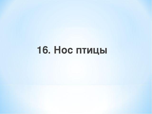 16. Нос птицы