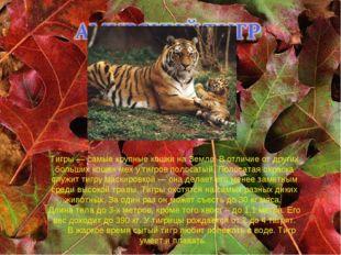 Тигры — самые крупные кошки на Земле. В отличие от других больших кошек мех у