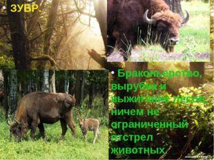 ЗУБР. Браконьерство, вырубка и выжигание лесов, ничем не ограниченный отстрел