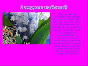 Ландыш майский- настоящее чудо природы. Этот удивительный цветок с нежным аро