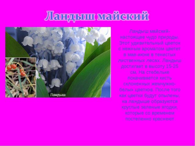Ландыш майский- настоящее чудо природы. Этот удивительный цветок с нежным аро...